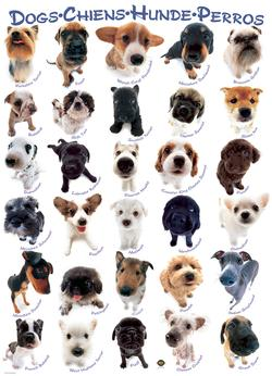 Dogs Collage Jigsaw Puzzle