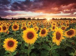 Field of Sunflowers At Dusk Sunflower Jigsaw Puzzle