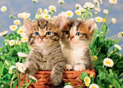 Sweet Kittens Kittens Jigsaw Puzzle