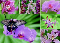 Holland Orchids Collage Jigsaw Puzzle
