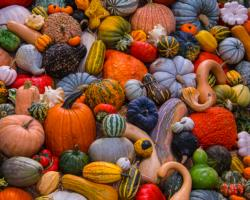 Autumn Harvest Collage Jigsaw Puzzle