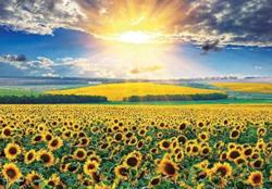 Sunflower Field 5 Sunflower Jigsaw Puzzle
