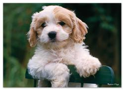 Precious Puppy Photography Children's Puzzles