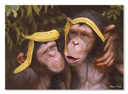 Cheeky Chimps Other Animals Jigsaw Puzzle