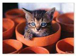 Flowerpot Kitten Cats Jigsaw Puzzle
