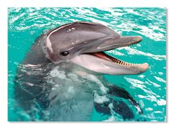 Smiling Dolphin Dolphins Jigsaw Puzzle