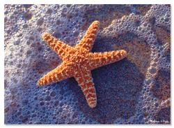Sun-Kissed Sea Star Marine Life Jigsaw Puzzle