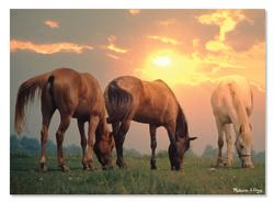 Sunrise Horses Sunrise/Sunset Jigsaw Puzzle