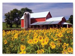 Sunflower Farm Farm Jigsaw Puzzle