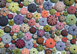 Sea Urchins Pattern / Assortment Jigsaw Puzzle