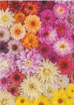 Dahlia Flowers Jigsaw Puzzle
