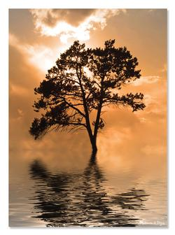 Tree Island Photography Jigsaw Puzzle