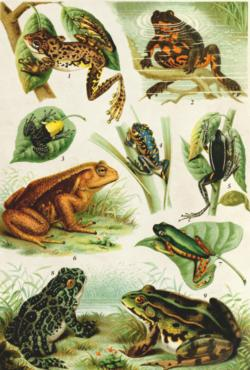 Frogs Jigsaw Puzzle