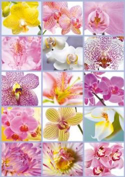 Collage of Flowers Flowers Jigsaw Puzzle