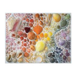 Rainbow Seashells Seascape / Coastal Living 2000 and above
