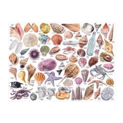 Beachcomber's Companion Beach Jigsaw Puzzle