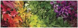 Plant Life Plants Panoramic Puzzle