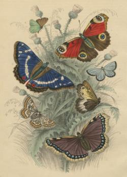 Dancing Butterflies Butterflies and Insects Jigsaw Puzzle