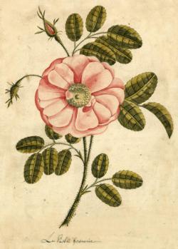 Garden Rose Flowers Jigsaw Puzzle