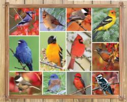 Songbirds Collage Jigsaw Puzzle