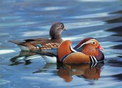 Mandarin Duck - Scratch and Dent Lakes / Rivers / Streams Jigsaw Puzzle