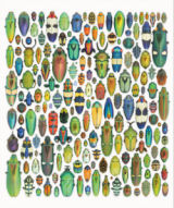 Exquisite Creatures Butterflies and Insects Jigsaw Puzzle