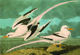 White-tailed Tropicbird Contemporary & Modern Art Jigsaw Puzzle