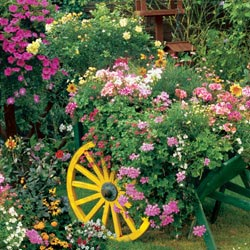 Blooming Cart Flowers Jigsaw Puzzle