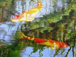 Koi Carp Fish Jigsaw Puzzle