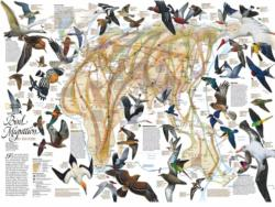 Eastern Bird Migration Maps / Geography Jigsaw Puzzle