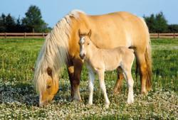 Mare with Foal Horses Jigsaw Puzzle