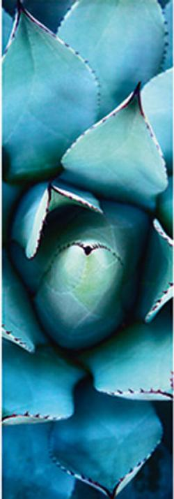 Blue Echeveria Nature Jigsaw Puzzle