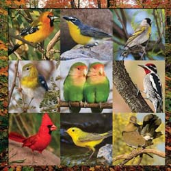 Song Bird Symphony Collage Jigsaw Puzzle