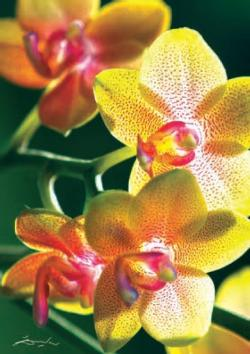Orchid (Nature) Flowers Jigsaw Puzzle