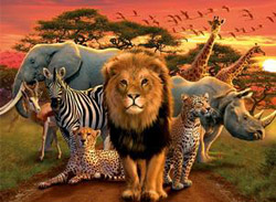 African Splendor Zebras Jigsaw Puzzle