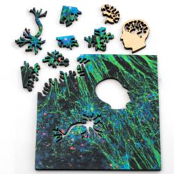 Green Neural Network Science One of a Kind Puzzle