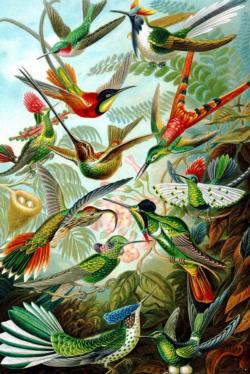 Hummingbirds by Ernst Haeckel Fine Art