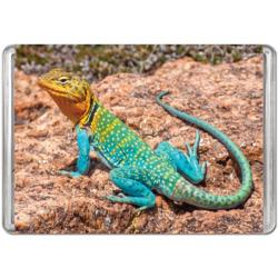 Collared Lizard  (Mini) Reptiles / Amphibians Miniature Puzzle