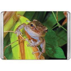 Coqui (Mini) Frog Miniature Puzzle