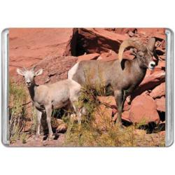 Desert Bighorn Sheep Animals Miniature Puzzle
