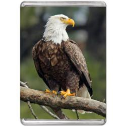 Bald Eagle (Mini) Birds Miniature Puzzle