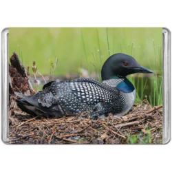 Common Loon  Birds Miniature Puzzle