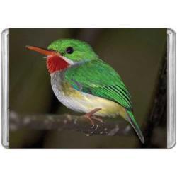 Puerto Rican Tody Birds Miniature Puzzle