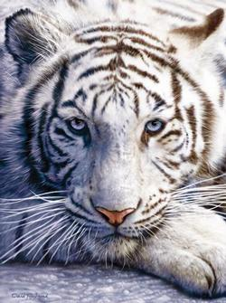 MINI - White Tiger Face Jungle Animals Jigsaw Puzzle