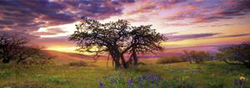 Oak Tree Sunrise / Sunset Panoramic Puzzle