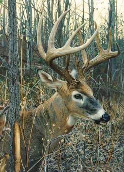 White-tailed Deer Forest Jigsaw Puzzle