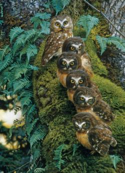 Family Tree Owl Jigsaw Puzzle
