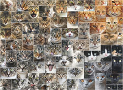 Cat Faces Cats Jigsaw Puzzle