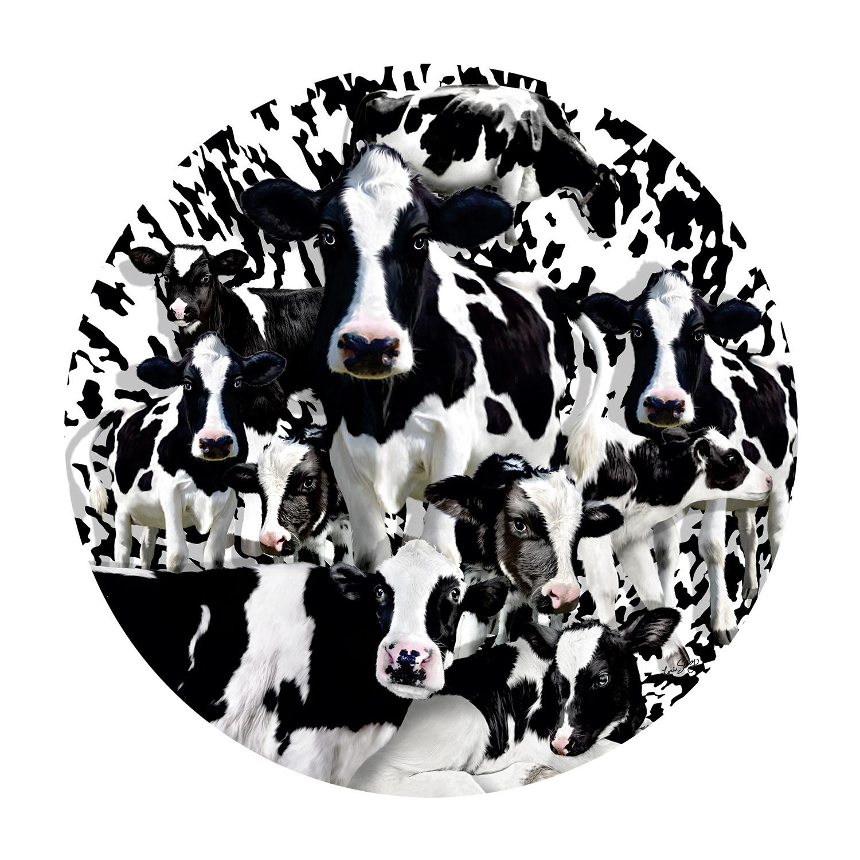 Herd of Cows 1000