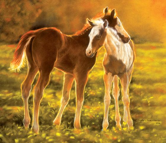 Backlit Foals